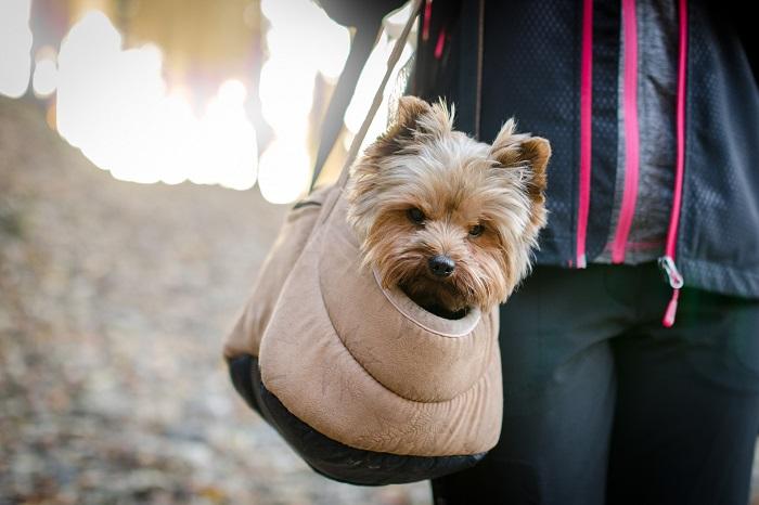 Taška pre psa na voľné chvíle