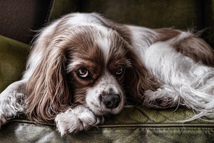 Matrac pre psa na oddych
